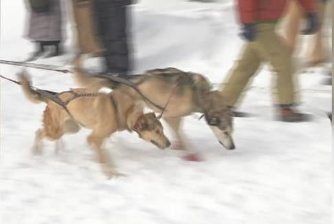 The Darby Sled Dog Race returns to Lots Trail Pass. (MTN News photo)