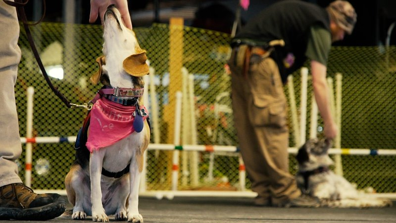 Can My Family Dog Become A Ptsd Service Dog