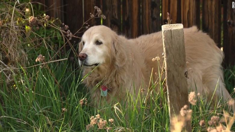 Marijuana leftovers get dog sick in Colorado