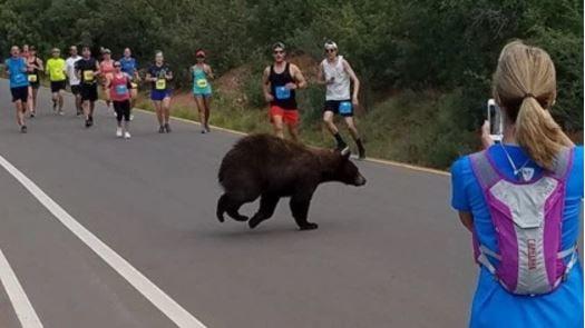 Bear crosses through Colorado race