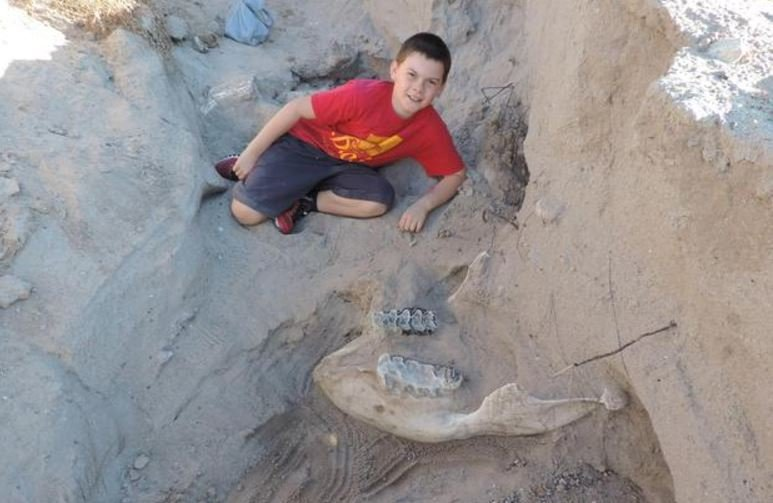 Jude Sparks, 10, said he literally fell on this 1.2-million-year-old stegomastodon skull on the outskirts of his neighborhood in Las Cruces, New Mexico. NEW MEXICO STATE UNIVERSITY