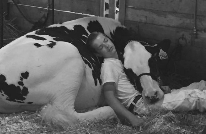 Heartwarming photo of boy and cow napping at Iowa State Fair