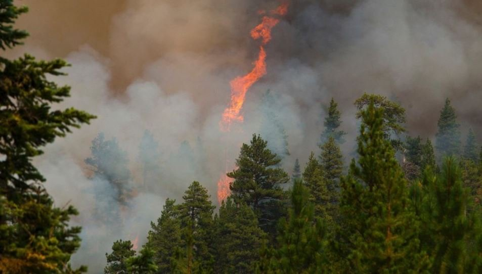 A tree explodes into flames during a wildfire near Sisters, Oregon on Thursday (CNN)