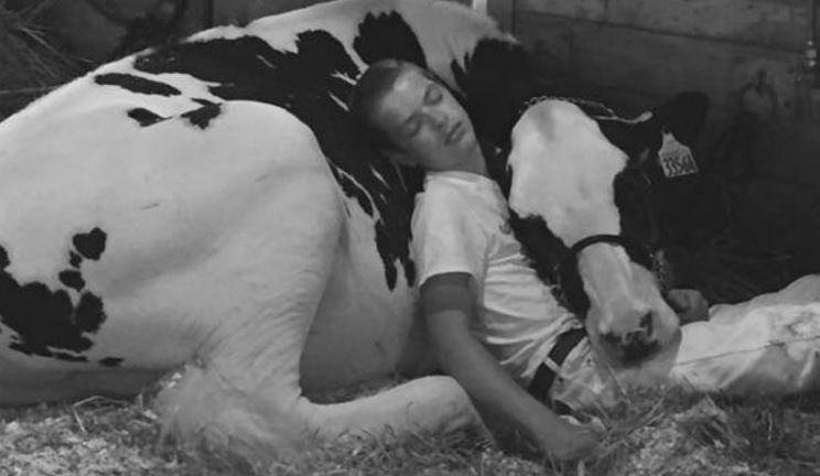 Jeremy Miner took a photo of his son, Mitchell with his heifer, Audri as they slept together after their Iowa State Fair contest on Sat., Aug. 12, 2017. (JEREMY MINER)
