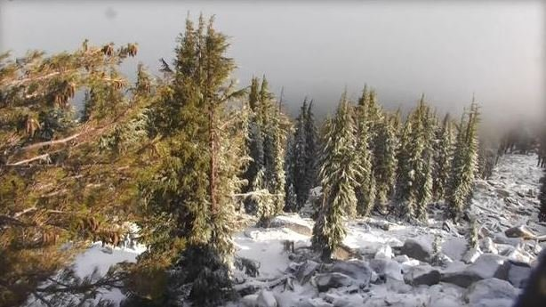 Snow falls in the Sierra Nevada mountains on the last day of summer, Thursday, Sept. 21, 2017 (CBS News)