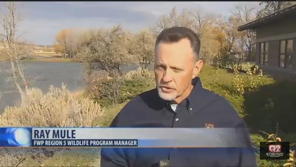Ray Mule of Montana Fish, Wildlife and Parks. (MTN News)