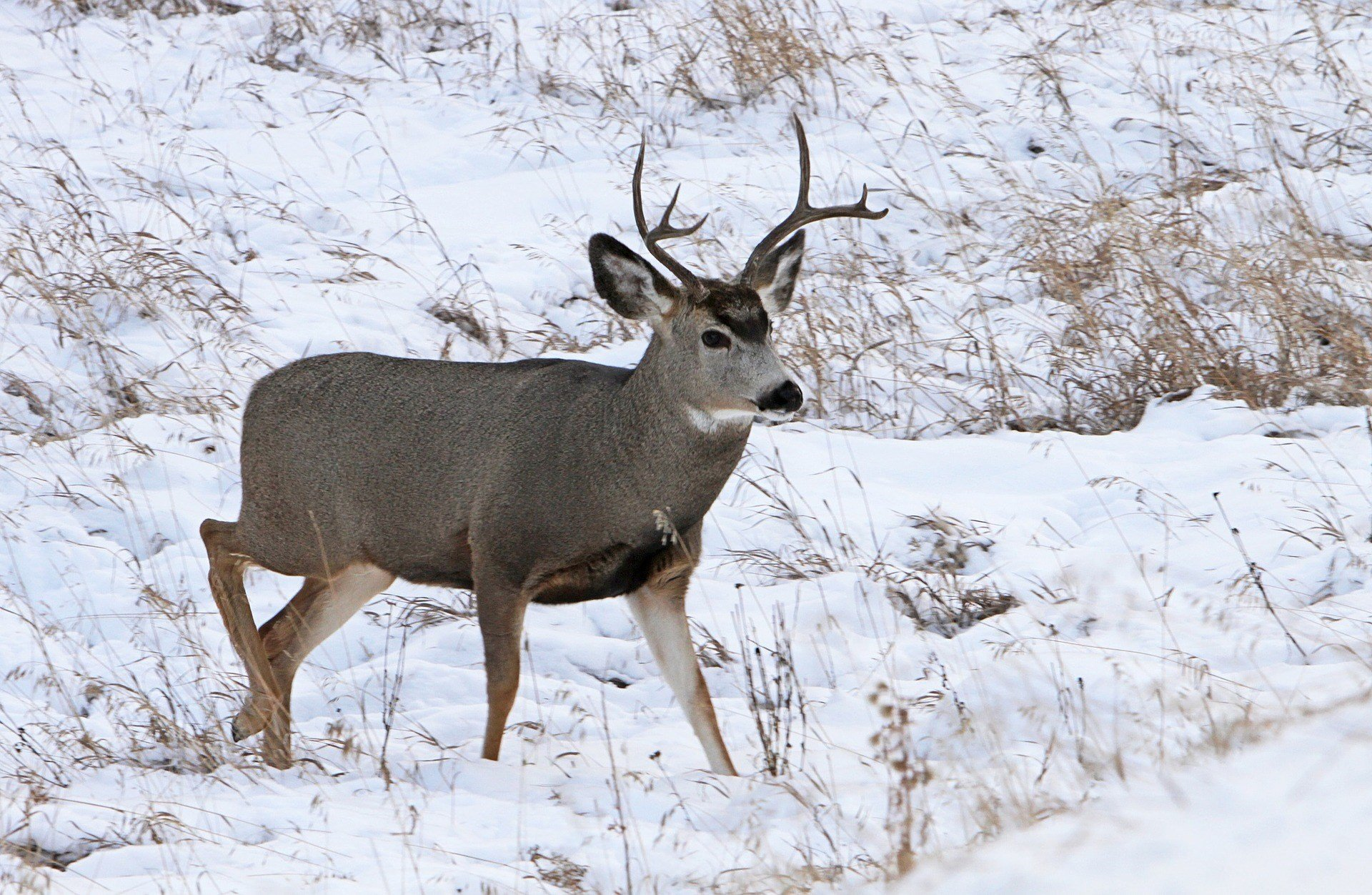 Suspected cases of chronic wasting disease in MI  deer doubles