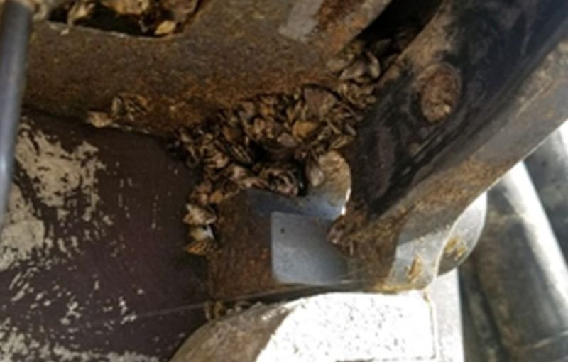 The Montana Fish, Wildlife & Parks watercraft inspection station in Anaconda intercepted a boat carrying zebra mussels.