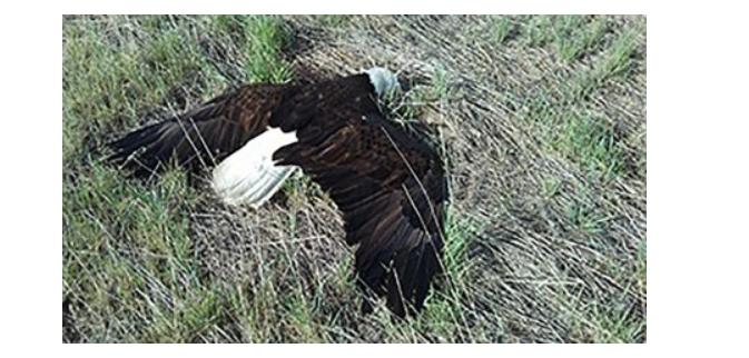 courtesy of Colorado Parks and Wildlife.