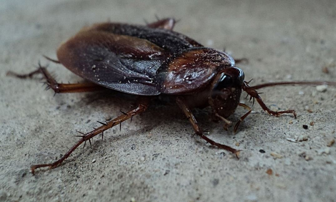 Cockroach milk could be creeping on to the menu