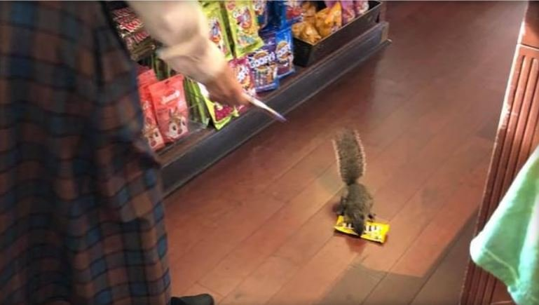 A squirrel was caught shoplifting at Disney's Magic Kingdom in Florida. / JESSICA DORNFRIED