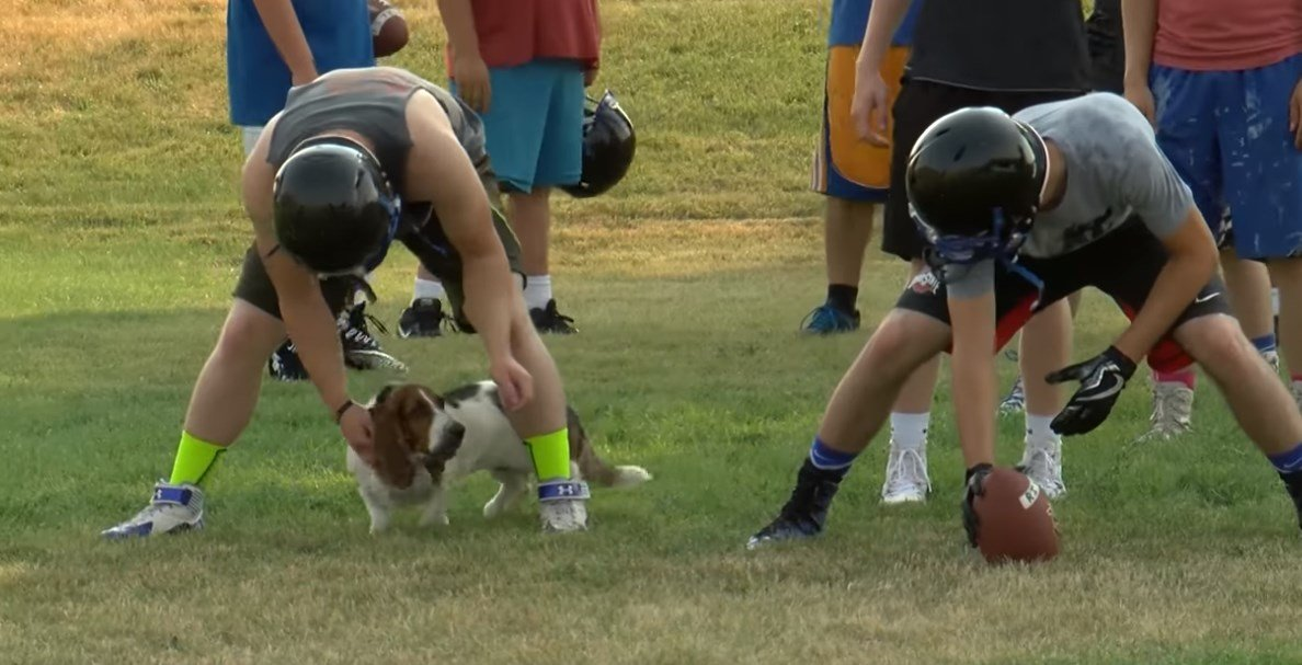 Dog crashes high school football practice (MTN News Photo)