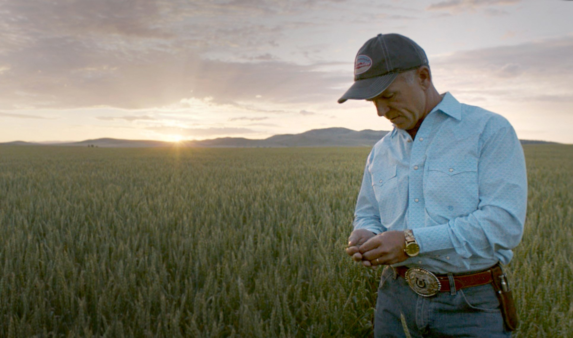 Dean Folkvord inspects a Wheat Montana field as harvest approaches.