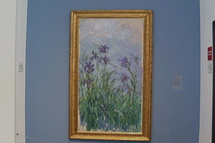 The Purple Iris is on display at the YAM (MTN News)