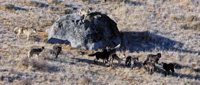 (Yellowstone National Park photo)