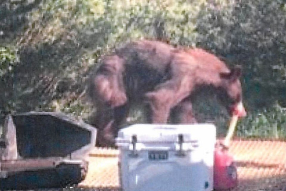 Food storage order in effect after three bear incidents in for Wyoming game and fish jobs