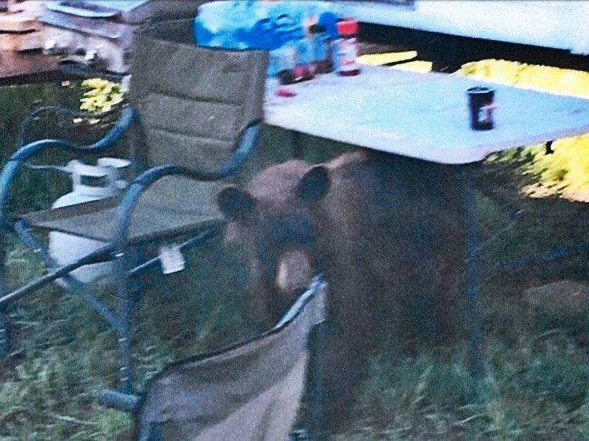 Food storage order in effect after three bear incidents in for Wyo game fish