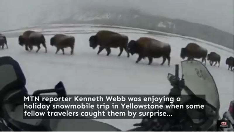 Christmas bison in yellowstone national park video for Bison motors great falls mt