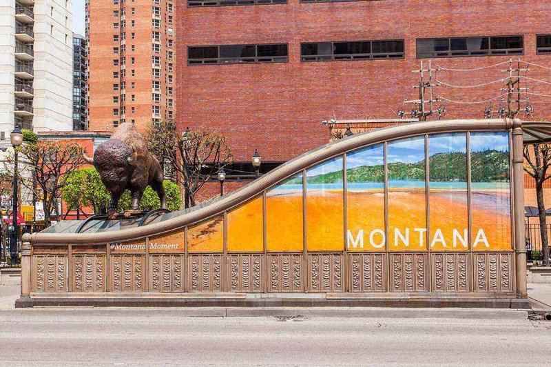 Montana bear buffalo find home in chicago krtv news in for Bison motors great falls mt