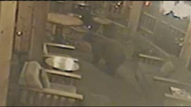 Bear Sneaks In To Cooke City Hotel Restaurant Ktvq Q2 Continuous News Coverage Billings Mt