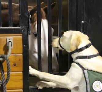 Service Dog Training Billings Mt