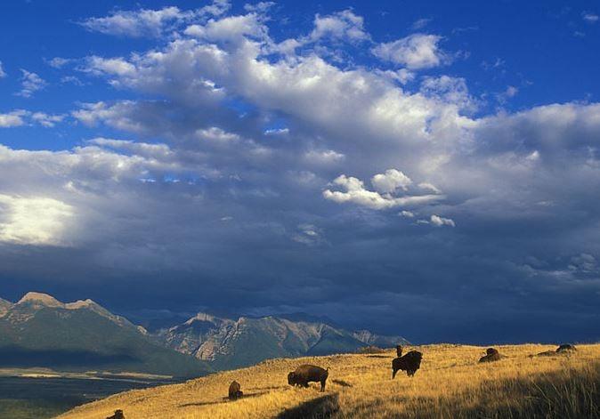 National bison range may move toward tribal management for Bison motors great falls mt