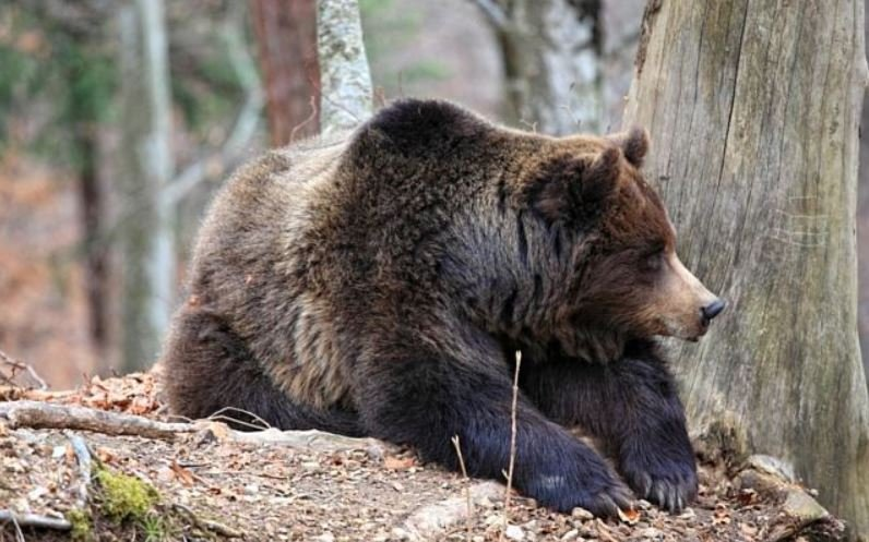 More bear activity being reported across Western Montana